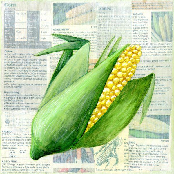 Victory garden: Corn