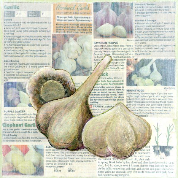 Victory garden: Garlic